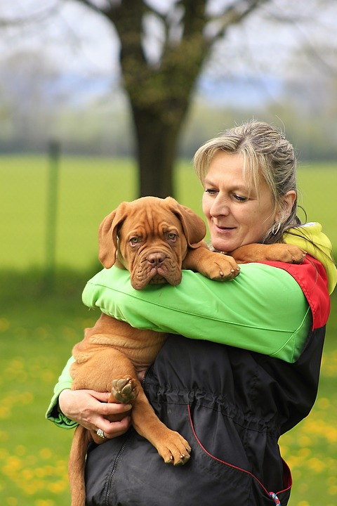 Bordeaux, Dog, Dogue, Mastiff, De, French, Sunny, Brown