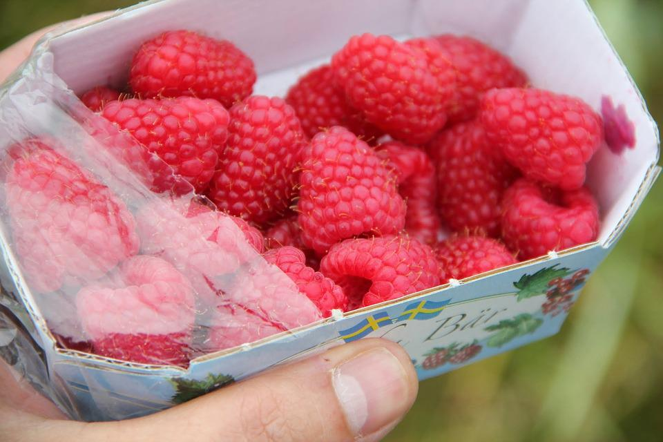 Raspberries, Fresh, Summer, Pick, Fresh Berries