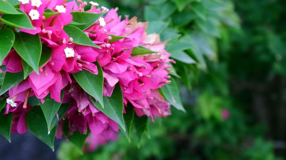 Flower, Park, Fresh Bright, Flower Wall, Plant, Fence