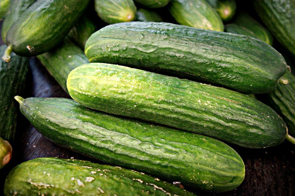 Cucumber, Vegetable, Fresh Cucumber, Cucumis Sativus