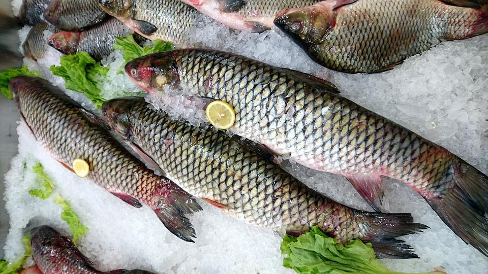 Skygazer, Fresh Fish, Carp, Nature, Animals, Shop, Ice
