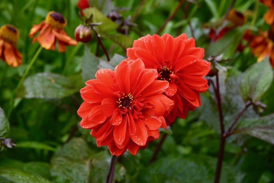 Flower, Blossom, Garden, Bloom, Fresh, Close, Flora