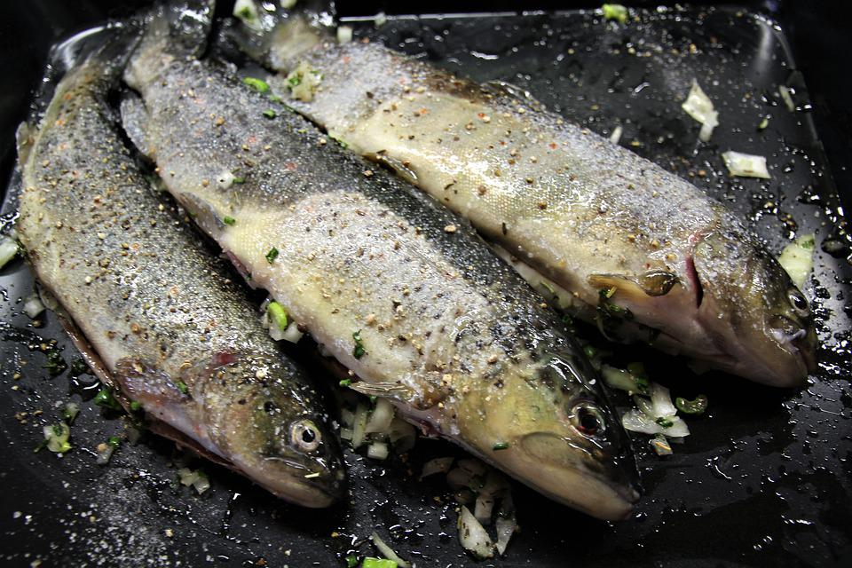 Fish, Trout, Brook Trout, Grill, Grilled, Fried, Fresh