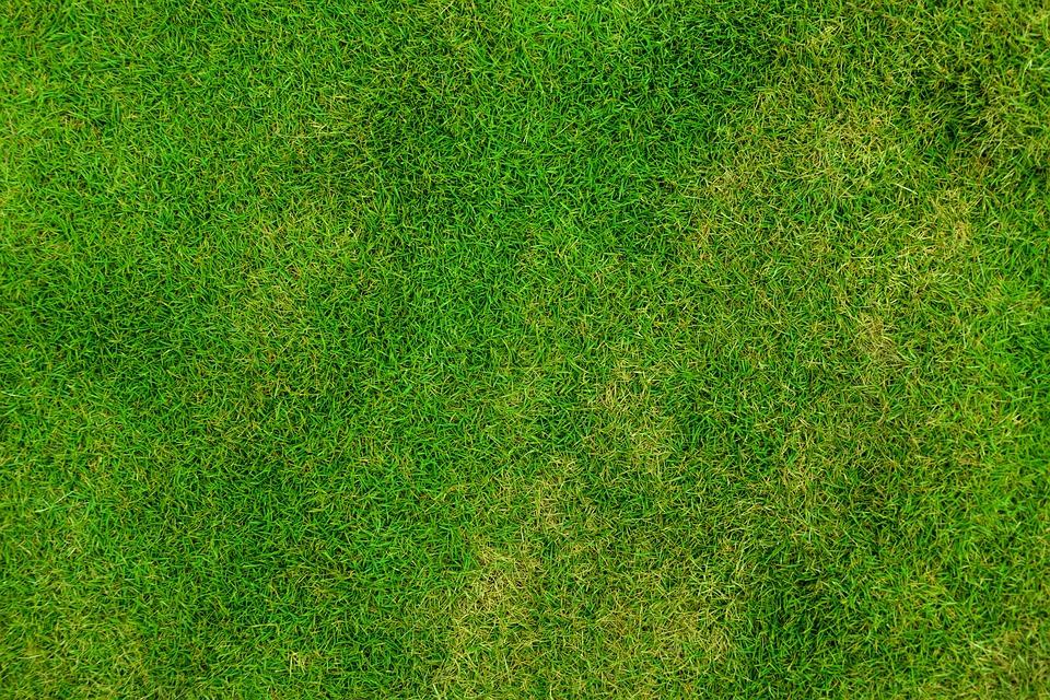 Grass, Lawn, Backdrop, Background, Field, Fresh, Green