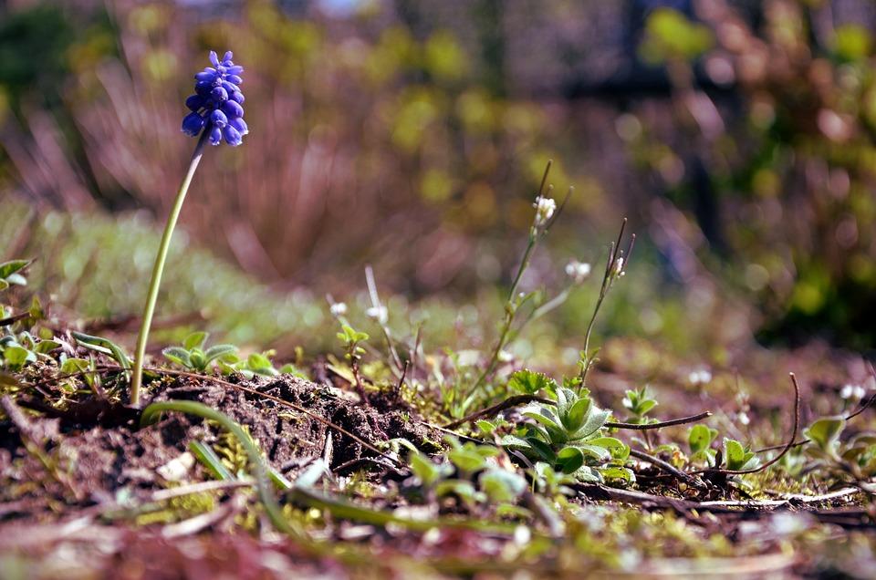 Flower, Spring, Ground, Nature, Green, Fresh, Natural