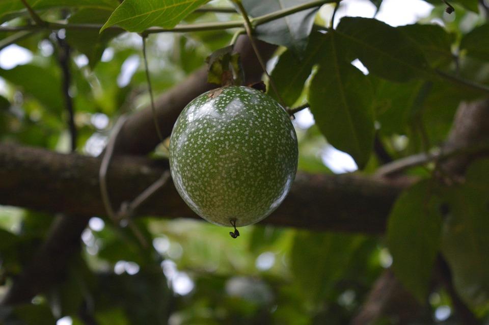 Fruit, Fresh, Food, Health, Nature, Healthy, Nutrition