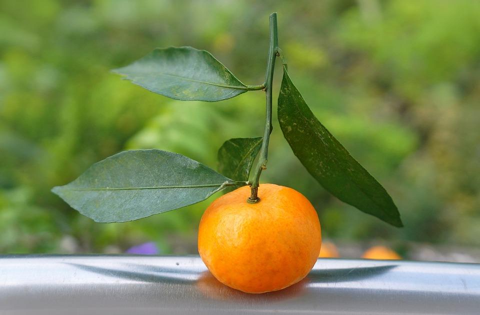 Food, Fruits, Tangerines, Vietnam, Fresh Orange
