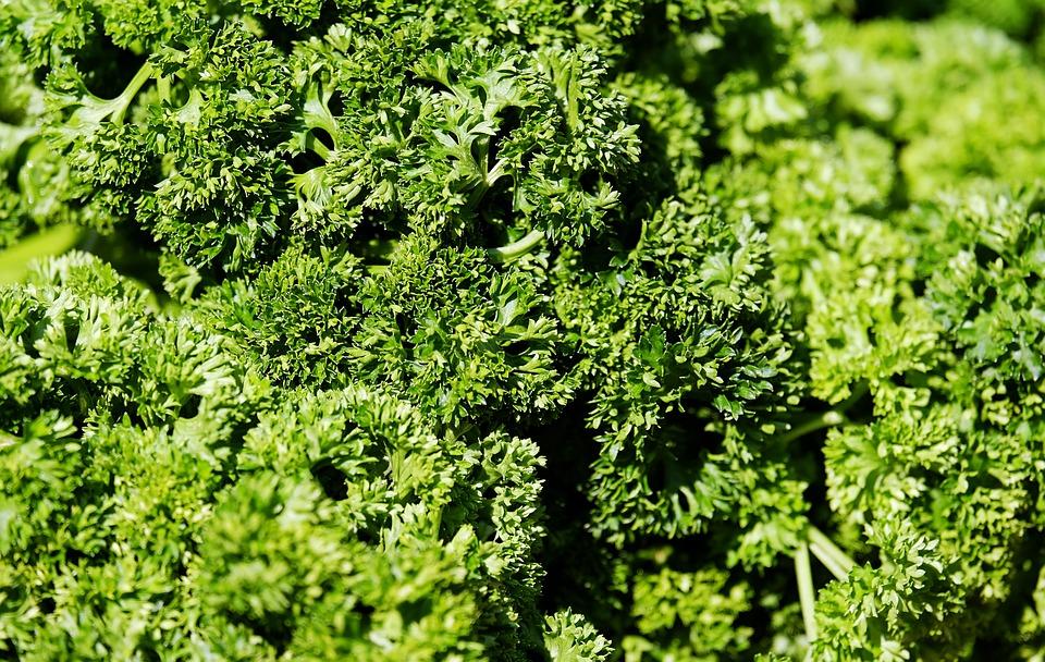 Parsley, Petroselinum Crispum, Green, Fresh, Herbs