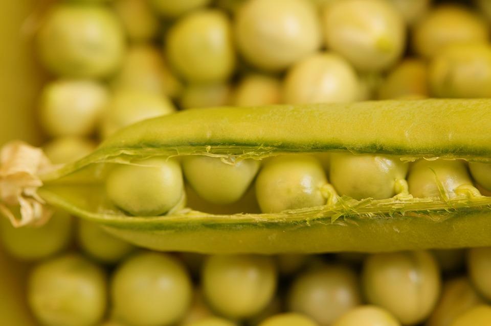 Pea Pod, Peas, Fresh, Pod, Green, Vegetables, Harvested