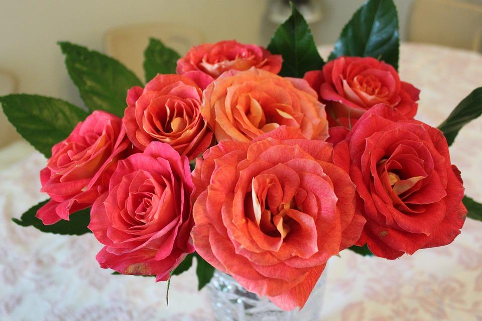 Red, Roses, Fresh