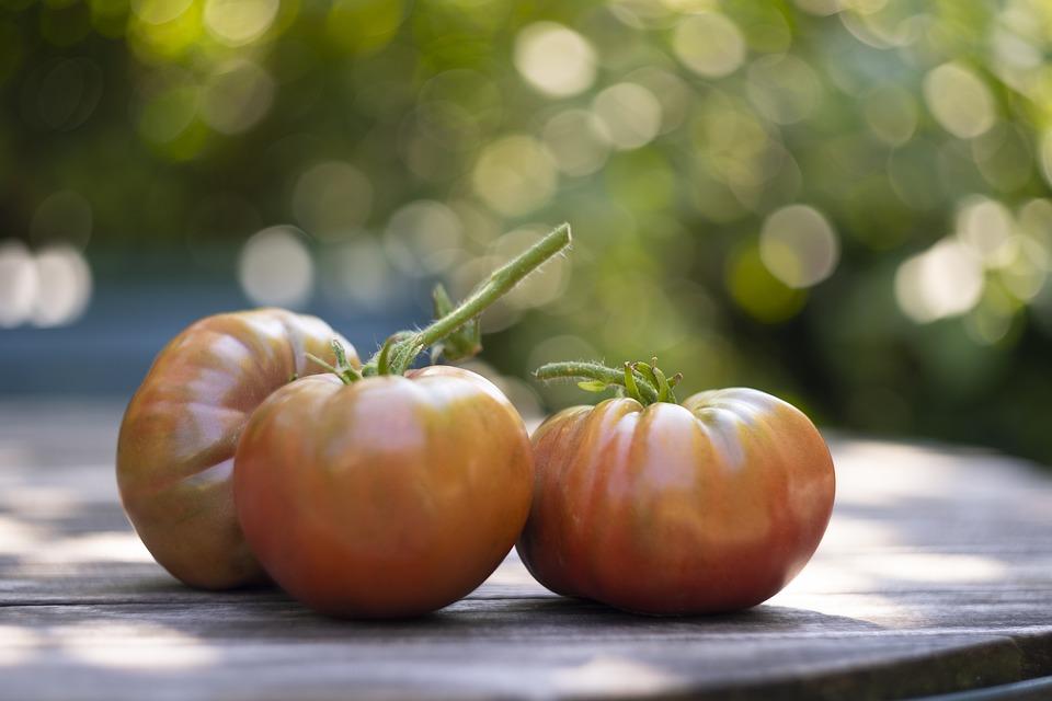 Tomato, Fruit, Vegetable, Garden, Red, Fresh, Salad