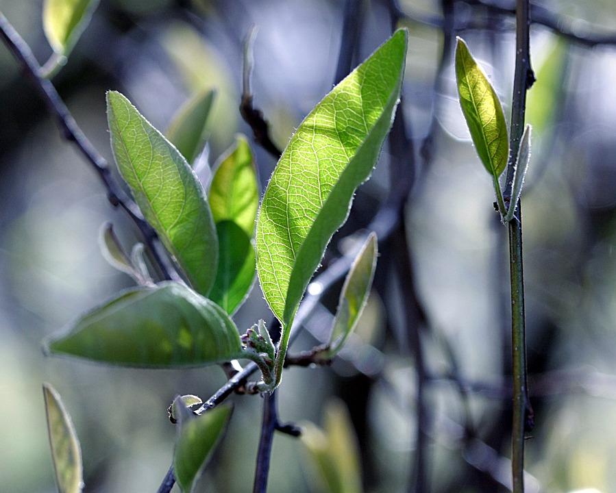 Plant, Leaf, Growth, Nature, Fresh, Season, Tree