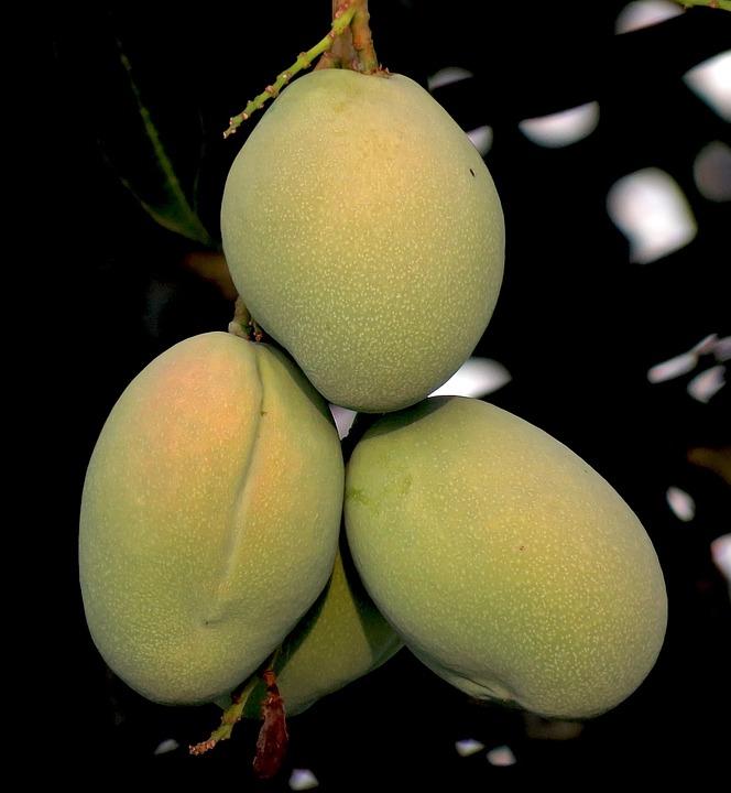 Mango, Fruit, Natural, Fresh, Vitamin, Color, Green