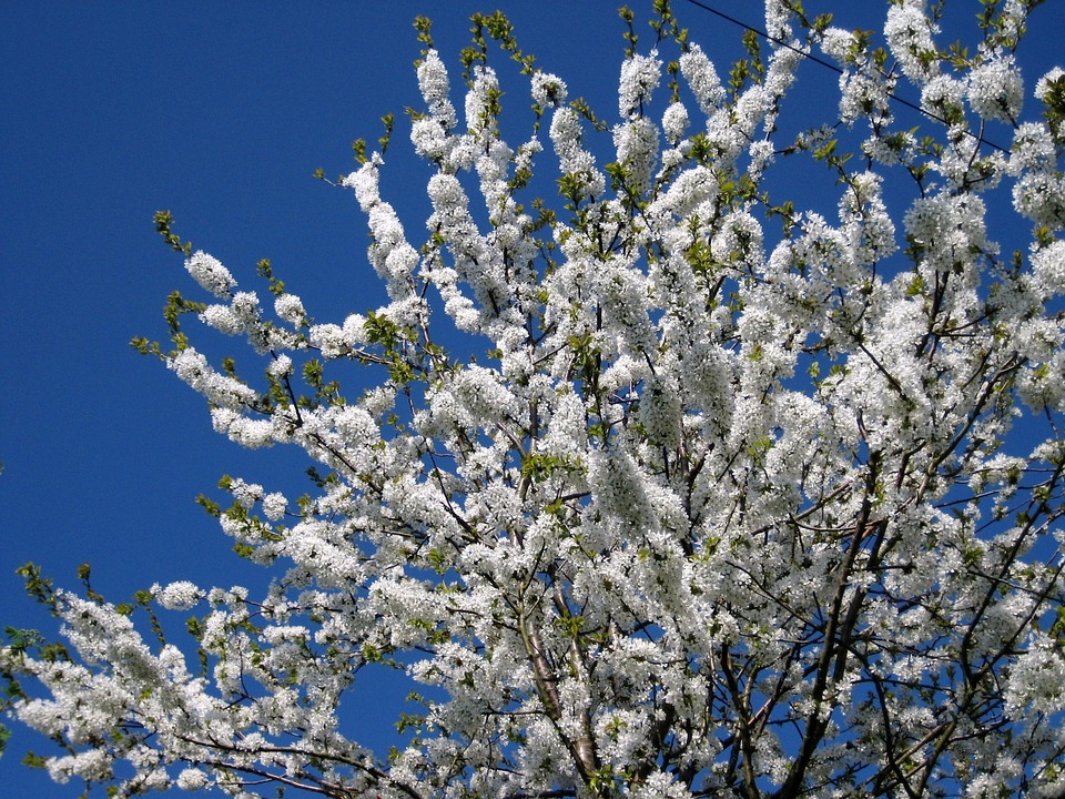 Blossom, May, Spring, Bloom, White, Tree, April, Fresh