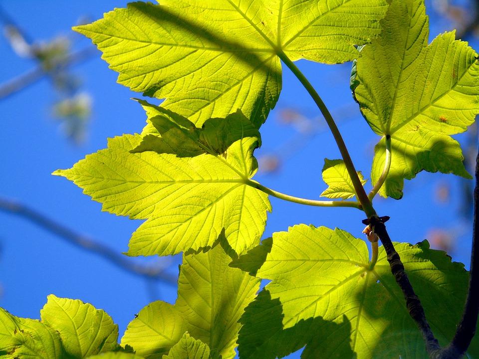 Leaf, Nature, Flora, Growth, Environment, Freshness