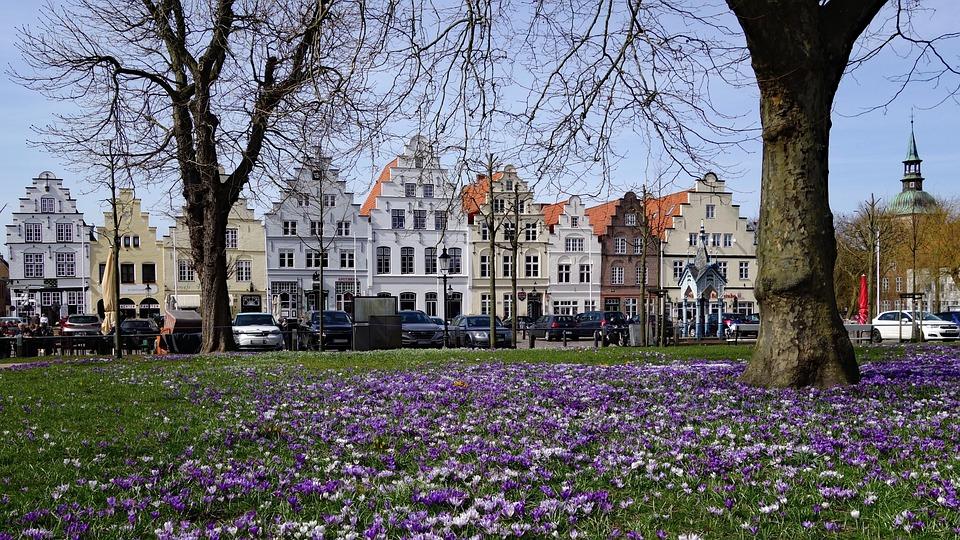 Friedrichstadt, Crocus, Crocus Flower, Mecklenburg