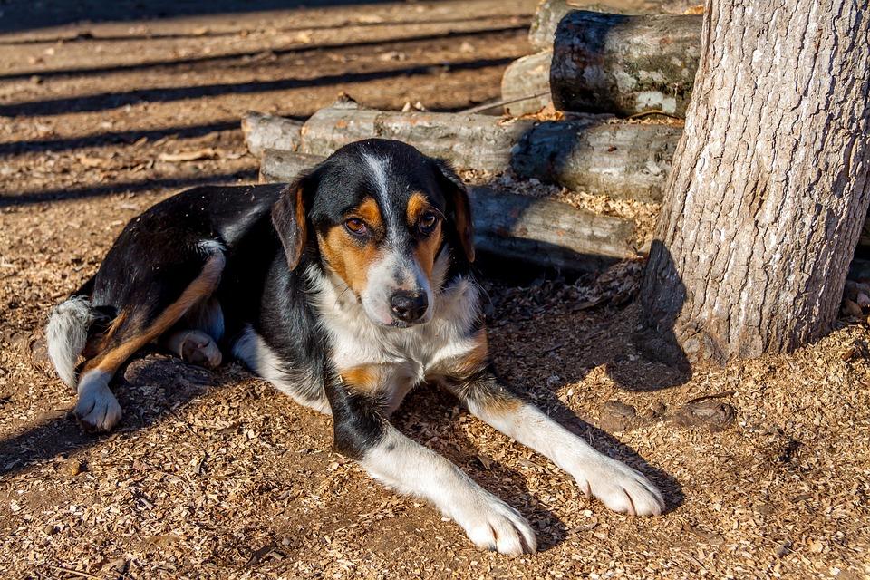Dog, Beautiful, Animal, Cute, Puppy, Outdoor, Friend
