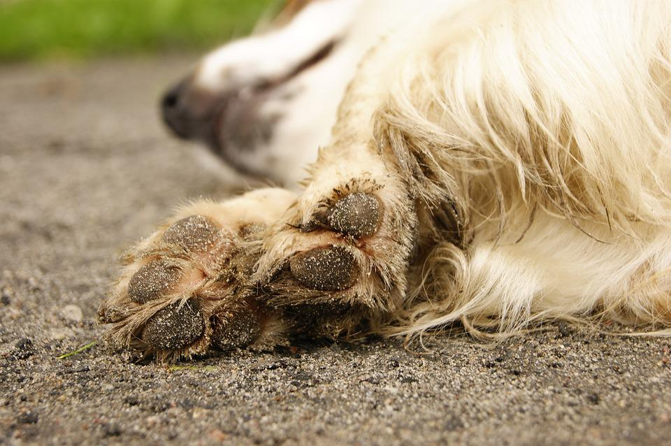 Dog, Paws, Friend, Paw, Pet, Animals, Pud, Track