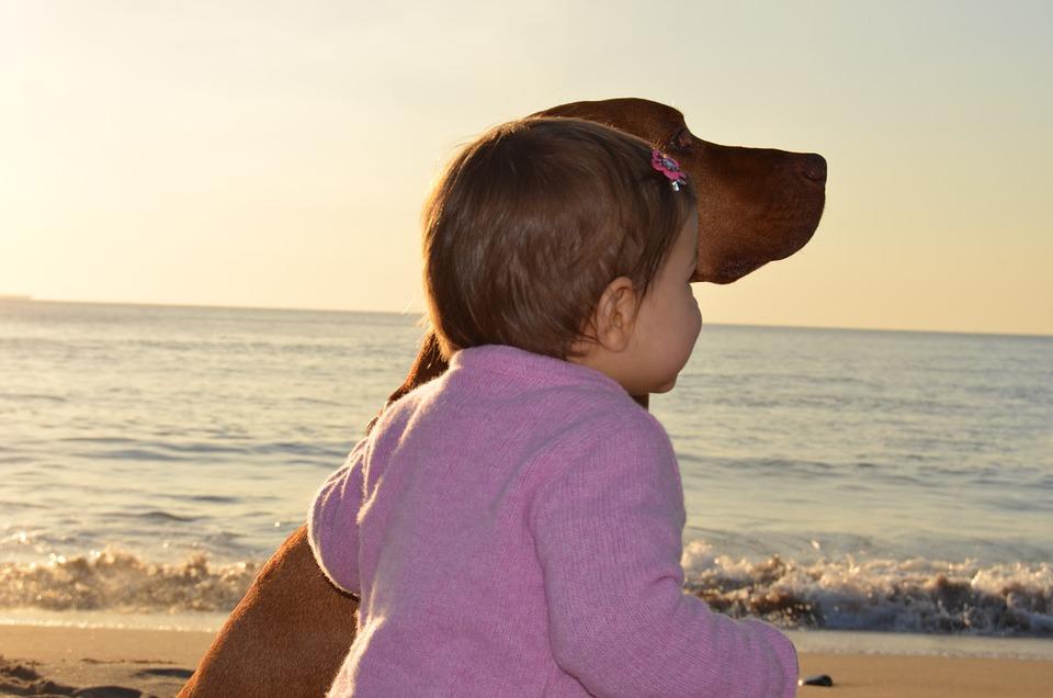 Child, Dog, Friends