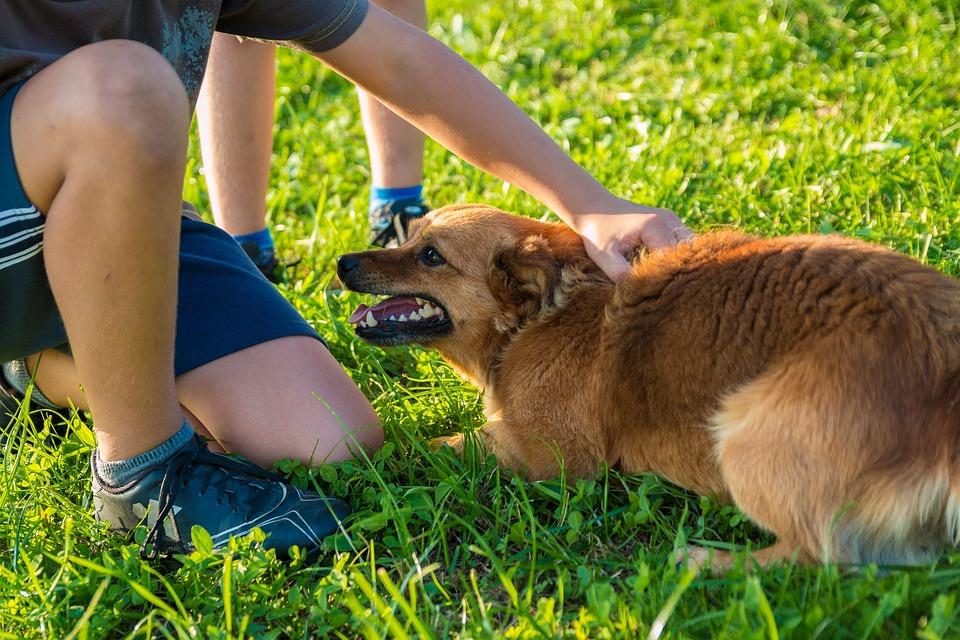 Dog, Man, A Friend Of Man, Fun, Friendship, Child