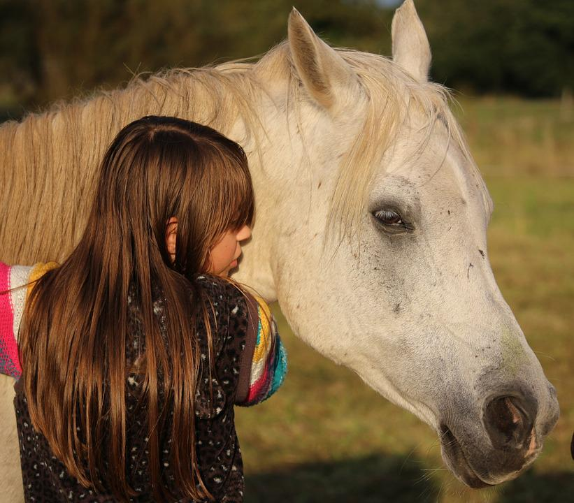 Horse, Girl, Mold, Friendship, Thoroughbred Arabian