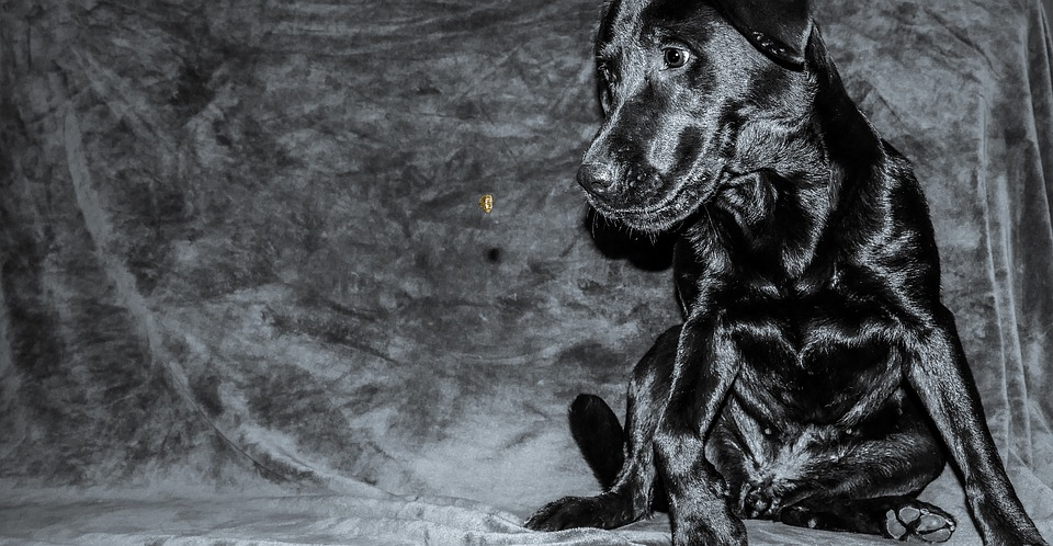 Dog, Love, Pet, Friendship, Animal, Puppy, Canine