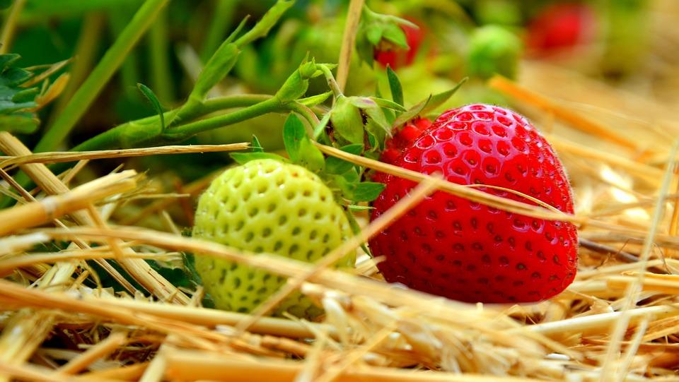 Field, Fruit, Fruits, Frisch, Tasty