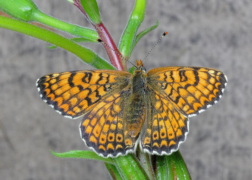 Butterfly, Fritillary, Insect, Summer, Colorful, Orange