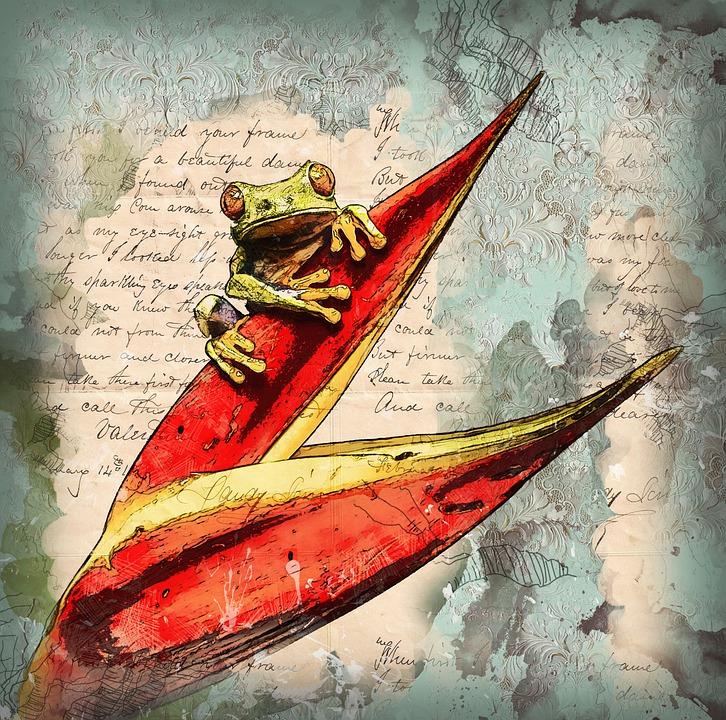 Frog, Amphibian, Animal, Wildlife, Nature, Exotic