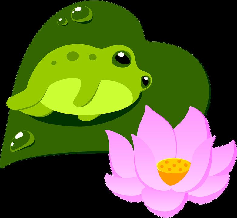 Frog, Lotus, Clip Art, Toad, Pond, Sketch, Cutout