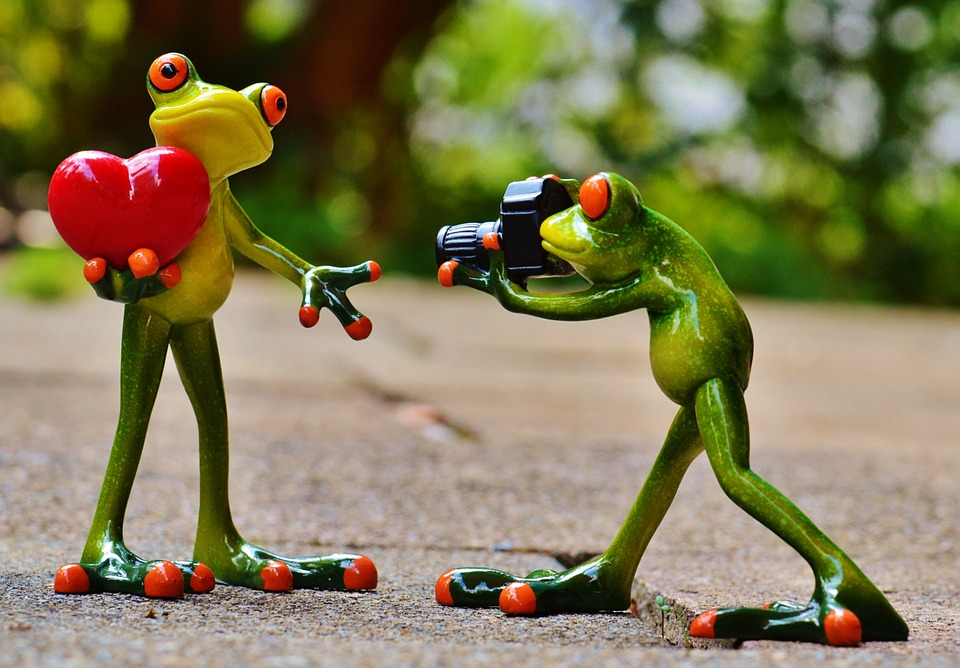 Frogs, Love, Valentine's Day, Pose, Photographer