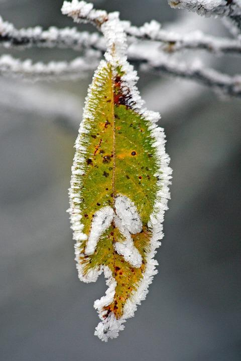 Winter, Frozen, Icing, Whites, Frost, Cold, Branches