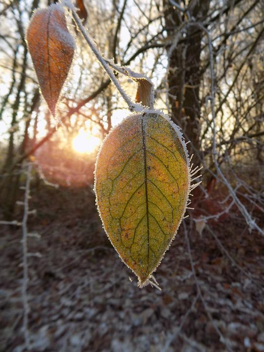 Frost, Cold, Frozen, Leaf, Nature