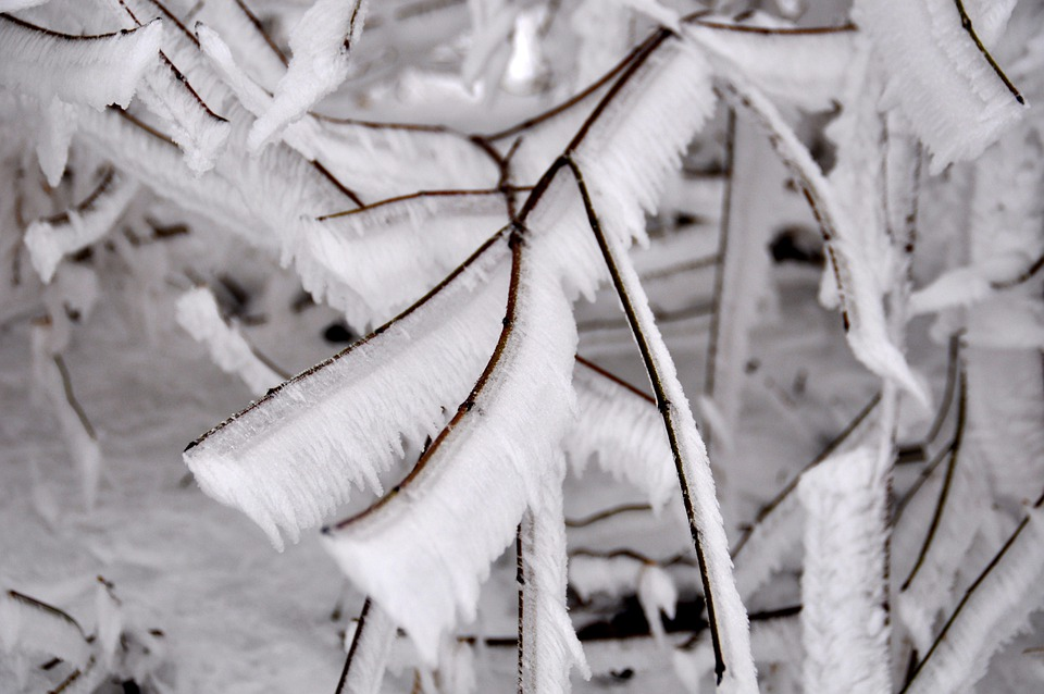 Frost, Cold, Snow, Winter, Ice, Frozen, Iced, Branch
