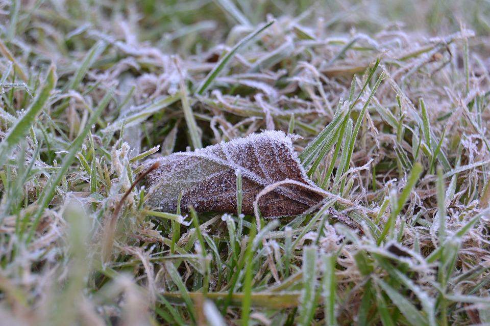 Sheet, Frost, Icing, Grass