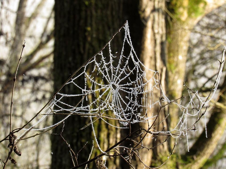 Cobweb, Frost, Cold, Hoarfrost
