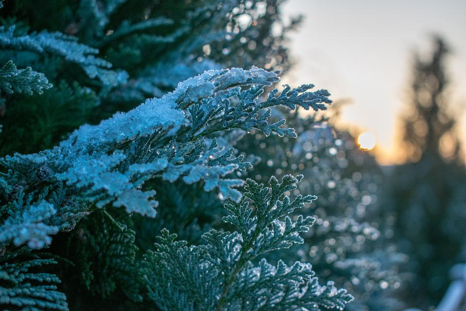 Frost, Nature, Winter, Tree, Season, Sunset, Ice, Snow