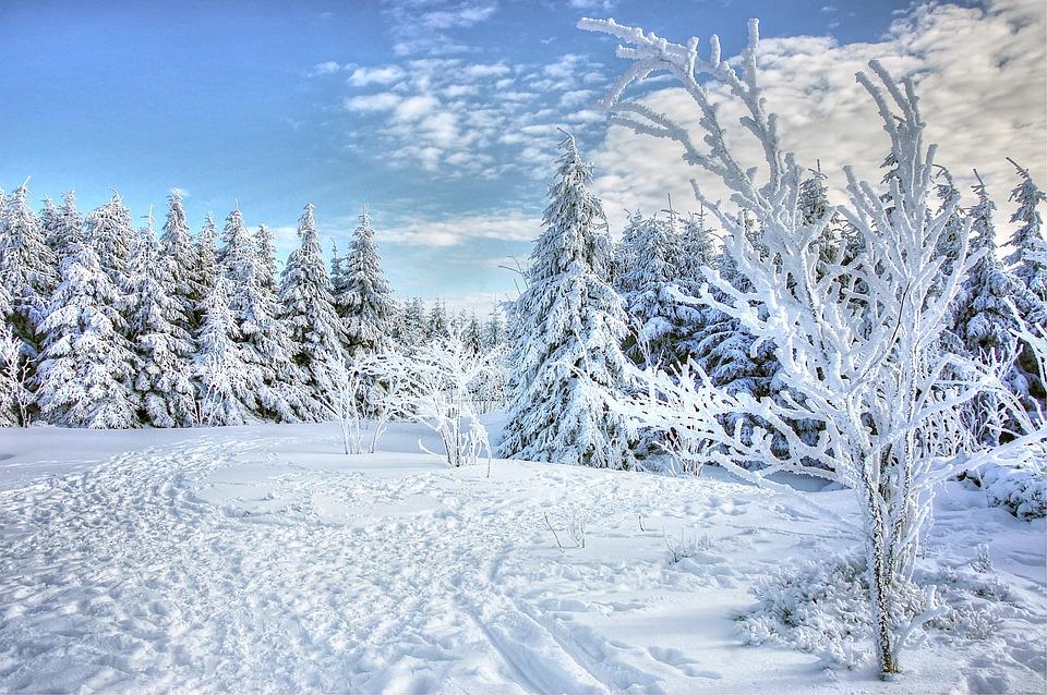 Snow, Winter, Frost, Cold, Frozen, Season, Wood, Ice