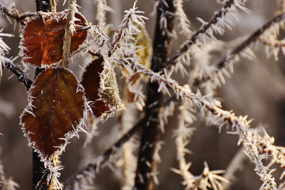 Leaves, Winter, Frost, Ice, Frozen, Iced, Nature, Cold