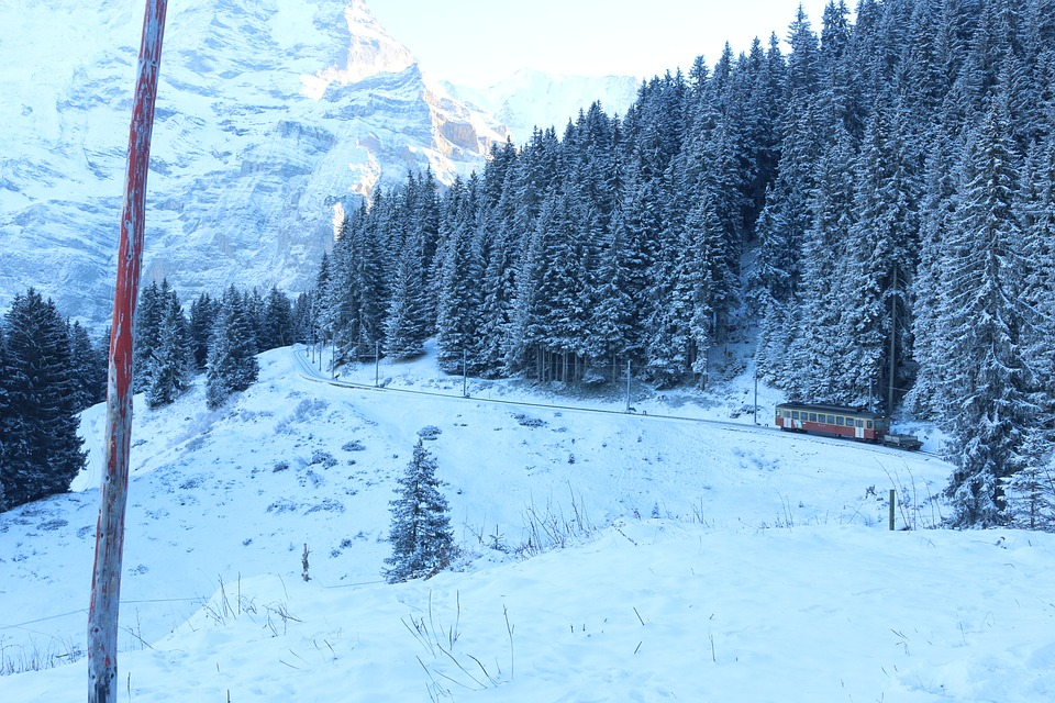 Snow, Winter, Cold, Wood, Frost, Mountain