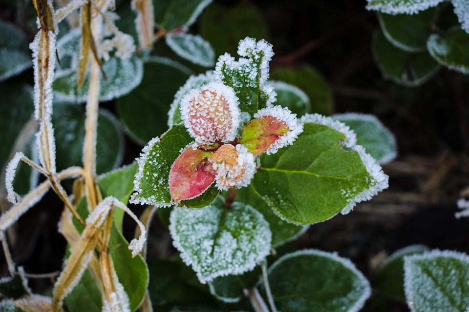 Frost, Plant, Leaves, Winter, Seasonal, Outdoor, Nature