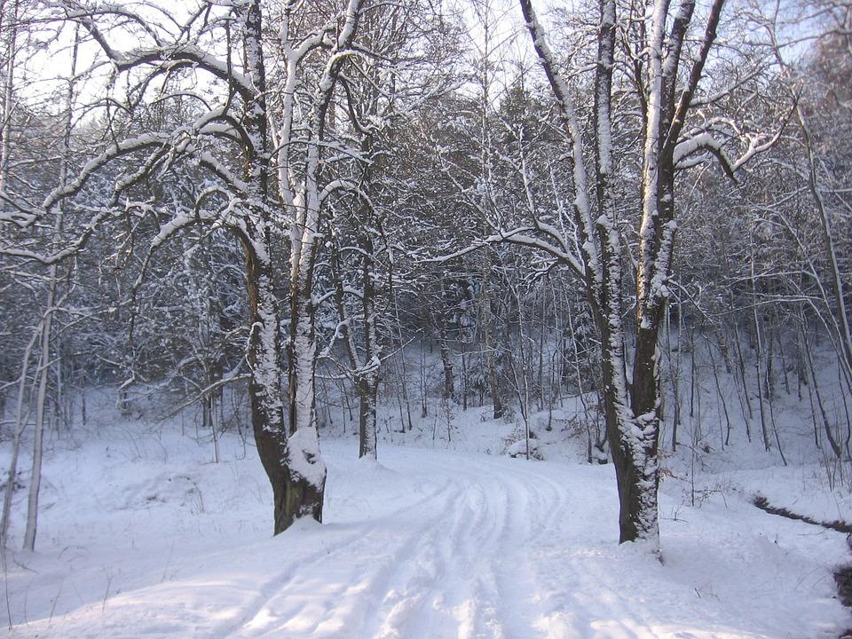 Snow, Winter, Road, Cold, Season, Frost, Snowy, Ice