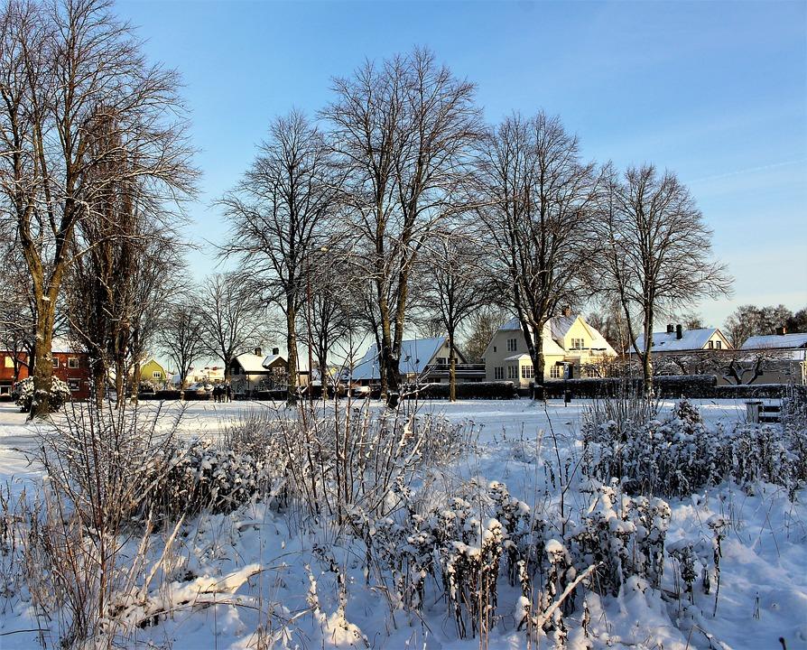 Tree, Winter, Snow, Season, Nature, Frost