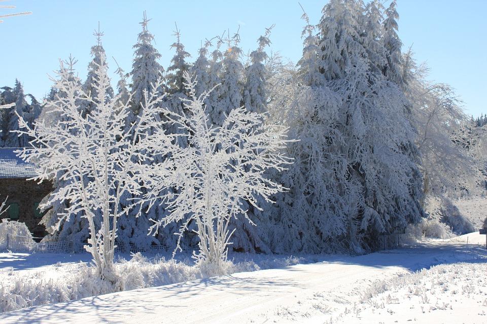 Snow Scene, France, Auvergne, Frost, Snow, Winter