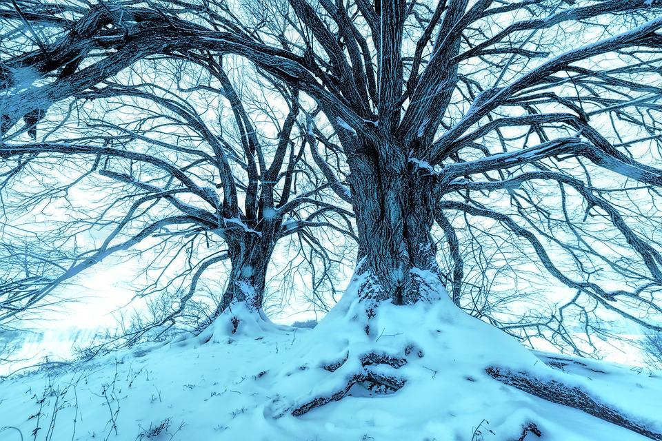 Tree, Aesthetic, Winter, Snow, Cold, Frost, Kahl