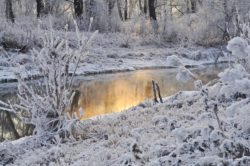 Snow, Trees, Winter, Water, Season, Ice, Frost, Snowy