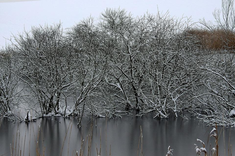 Winter, Frost, Snow, Landscape, Ice, Tree