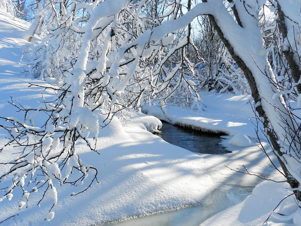 Winter, Frost, Snow, Snowdrifts, Trees, Glaciation