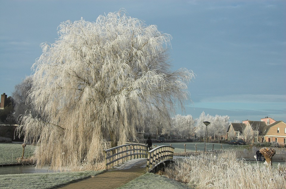 Weather, Winter, Snow, January, Frost