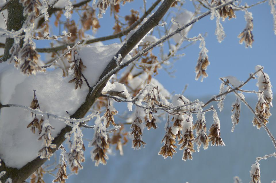 Winter, Frost, Branch, Icy, Frozen